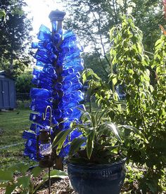 blue bottle tree...  FYI: Reisling wine & Bud Light Platinum come in blue bottles