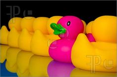 free rubber duck clip art   Pics of Dare to be different - rubber ducks on black