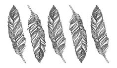 Feathers by Shinea    -Shay- Bruce, via Behance