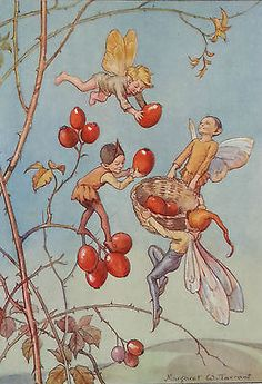 Fairies-Rose-Hips-Fairy-Vintage-Print-Margaret-Tarrant-1936-Childs-Nursery-RARE