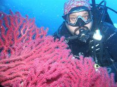 Ayvalık dalış okulu - ida dalış merkezi #idadiving #idadalismerkezi #dalisnoktam #ayvalikdalis #ayvalikdiveteam #scubadiving #tryscuba #underwaterphotography #underwaterphoto #underwaterworld #scuba www.idadiving.com M Yılmaz TABANLI - 0532 633 02 28
