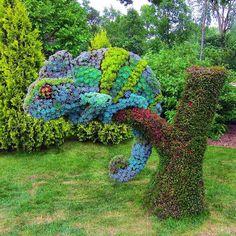 chameleon flower sculpture