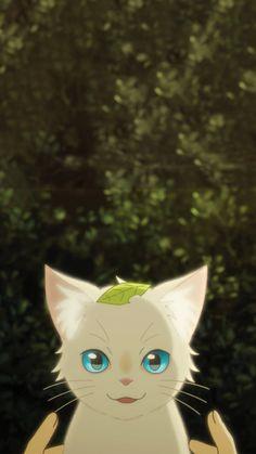 Cat anime wallpaper