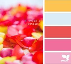 color petals by fifi luis