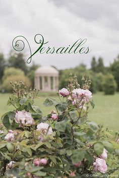 Gardens and Inspiration: A Day at Versailles | Georgianna Lane | Bloglovin'