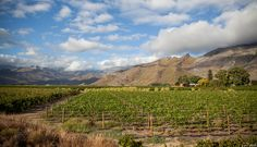 Cape Town Wine Country - http://www.jamaln.com/cape-town-wine-country/ - #Canon, #Capetown, #SA, #SouthAfrica