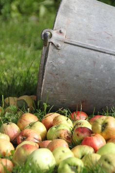 the type of apples I had growing up
