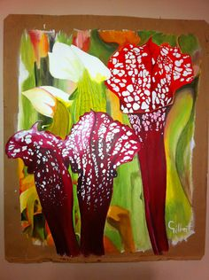 Pitcher plant/acrylic on cardboard