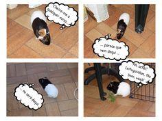 Manguliaucatafau: Funny #9