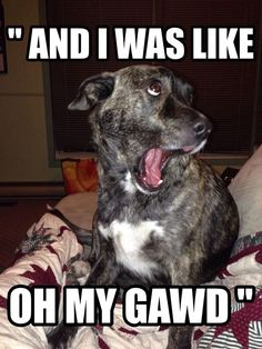Canine Curiosity: Does your dog make any funny faces?