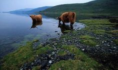 Let Scotland Made Easy design a very special itinerary tour for you to suit what YOU like and the time you will have here. Check us out at http://www.scotlandmadeeasy.co.uk