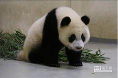 歡慶祖父母節 動物園免費邀祖孫檔遊園