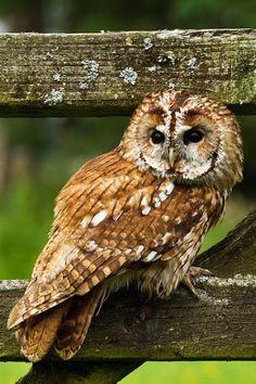 Owls - Community - Google+