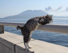Nyankichi le chat le plus photogénique du monde 2Tout2Rien