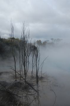Eerie - The town park in Rotorua New Zealand by Mila van Dulmen