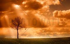 Orange Tree in field - Fototapeter & Tapeter - Photowall
