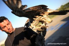 Falconry and bird strike: a millenary technique for airport security