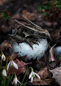 Anne Stokes Dragon | Baby dragon. Hatchling by Anne Stokes | Fairy tale