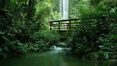 Tropical jungle with a bridge by a waterfall, Jurong Bird Park, Singapore, bc41236219db90a2848a6994ad6b6322