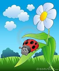 Image result for cute ladybird