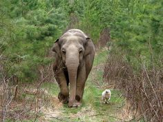 Elephants show remarkable empathy , even to other species.   27 Animal Facts That Will Brighten Your Day
