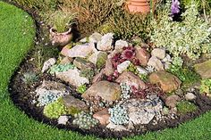 succulent rock garden. Love succulents and rocks together!