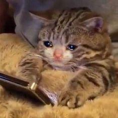 Ideas cats memes reaction for 2019 Sad Cat Meme, Cute Cat Memes, Cute Animal Memes, Stupid Funny Memes, Cute Funny Animals, Funny Animal Pictures, Funny Cats, Funny Humor, Cute Kittens