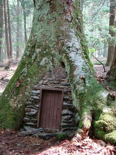 Leprechans live here!BTW this was taken at Holly River State Park in Webster County West Virginia.