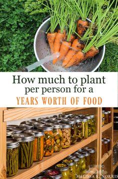Organic Vegetables, Growing Vegetables, Gardening Vegetables, Organic Fruit, Store Vegetables, When To Plant Vegetables, Grow Organic, Organic Herbs, Growing Tomatoes