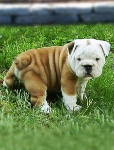 thick, pudgy and wrinkly..