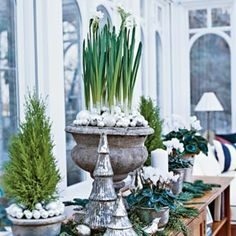 Mini trees, flowers and white christmas decorations