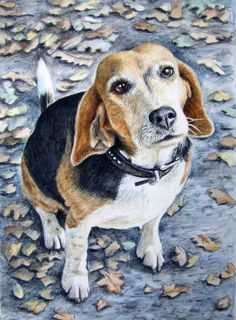 Beagle Portrait  Fine Art Print 30x40cm. by ArtsandDogs on Etsy