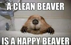 Clean your beaver!!!