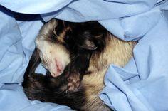 Jestem Szymon pokręcony, nawet jak śpię.