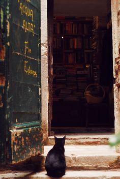 doremiau:  Cats love bookshops. @ Libreria Acqua Alta, Venice