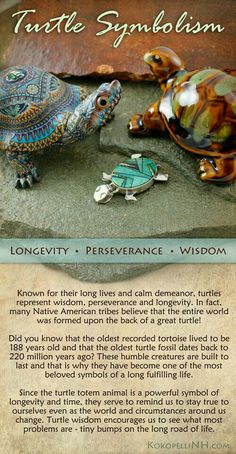 Native American Turtle Symbolism - Animal Symbolism - Knowledge Base - Kokopelli of NH Turtle Symbolism, Animal Symbolism, Animal Meanings, Animal Spirit Guides, My Spirit Animal, Turtle Quotes, Turtle Time, Tortoise Turtle, Native American Symbols