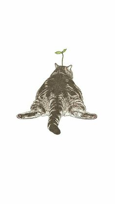 ...oh kirry... Fat Kitty, Here Kitty Kitty, Cat Art Print, Mochi, Cat Cat, I Love Cats, Crazy Cats, Papier Canson, Positive Thoughts