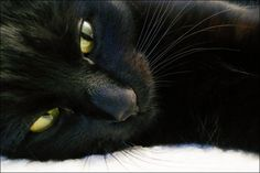 I used to have a black cat with beautiful green eyes. He was my buddy :(