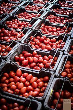How to Make Tomato Passata (The Italian Family Method)