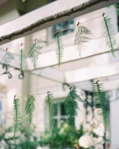 Delicate ferns were strung up behind the bar for a decorative accent.