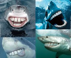 I wish their teeth looked like this! I would be so much less scared of them!