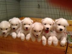 puppies all in a row