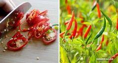 Τρώγοντας Αυτές τις Πιπεριές Αυξάνετε το Προσδόκιμο Ζωής σας κατά 13% λένε οι Επιστήμονες! Plastic Cutting Board, Stuffed Peppers, Vegetables, Kitchen, Food, Math Resources, Cooking, Stuffed Pepper, Kitchens