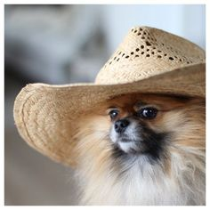 The weekend is here!!!! If I can't wear my Cowboy hat and boots, I don't want to go!! www.teacuptutucharm.com xoxo :)
