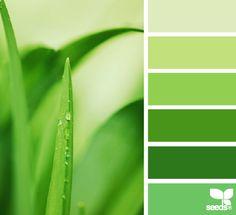 Monotone green scheme