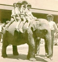 Pic of Queenie, the first elephant at the Nay Aug Park Zoo. According to a June 27, 2010, story written by Cheryl Kashuba for The #Scranton Times, Queenie made her way to Scranton from Germany in June of 1924 after school children and other residents of the Electric City donated enough change (over $3000) to purchase the elephant. Queenie made her debut on June 16 to a crowd of 25,000. #research #amwriting #scranton barbarajtaylor