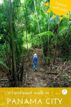 Panama With Kids: The Metropolitan Park. A rainforest walk in Panama City via @farflunglands