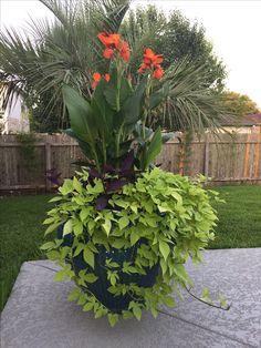 Possible design for pots around the u Utility box. Outdoor Planters, Garden Planters, Planting Succulents, Outdoor Gardens, Planting Flowers, Outdoor Decor, Bucket Gardening, Container Gardening, Garden Yard Ideas