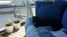 Mikki relaxing on summer holiday!
