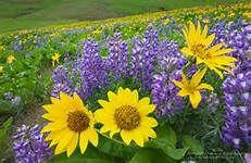 British Columbia wild flowers Flower Tattoos, British Columbia, Wild Flowers, Plants, Image, Wildflowers, Planets